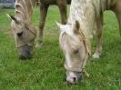 Cowhorse 08_207